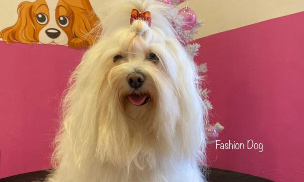 Chissà se Eros, il tanto amato cagnolino, puo' farmi risparmiare le tasse??